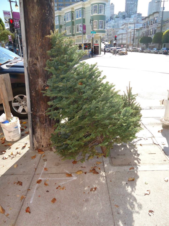 2016-tree-for-sale